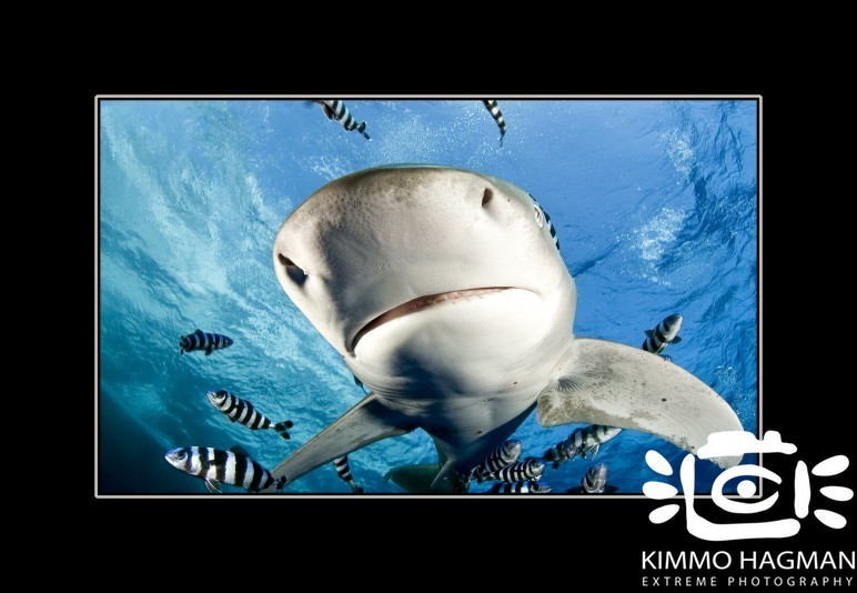 Underwater Photography – Shark Close Up